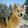 2010-01-19 Mt Brynion :