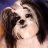 2009-01-03 Posin' Puppies ll :