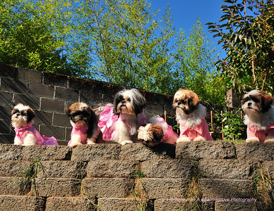 Posin Puppy Portraits